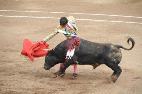 Toros (3)